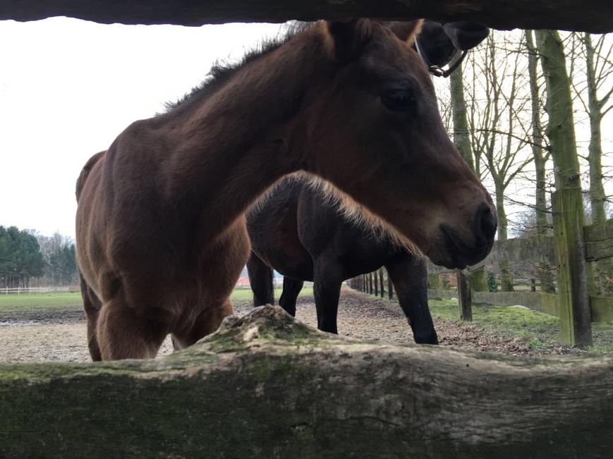 Pferde_1_HP.jpg